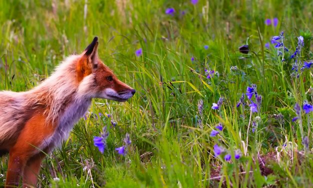 Dreamees Frilly Flowers and Fantastic Fox