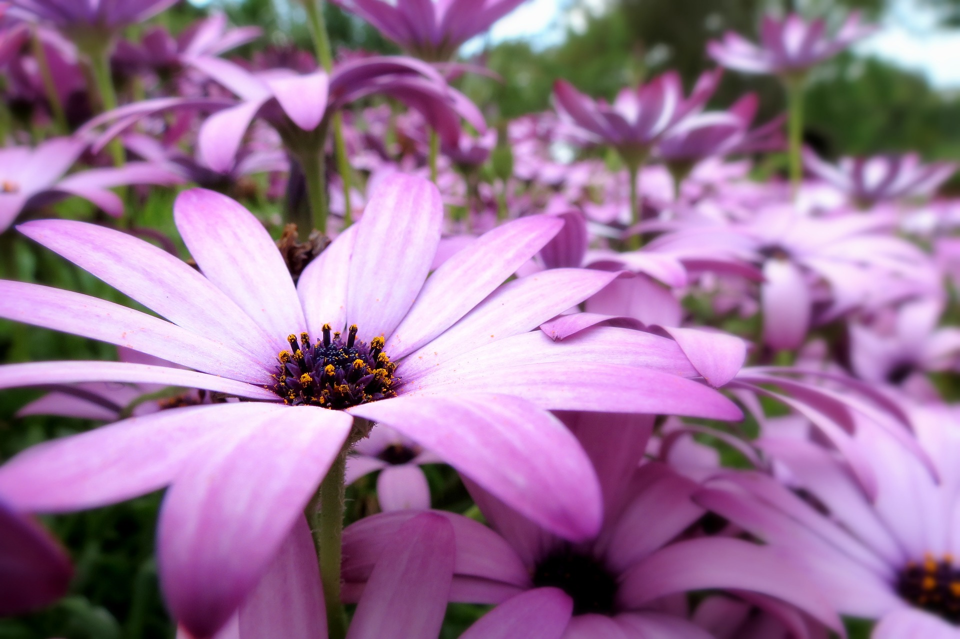 english floral gardens