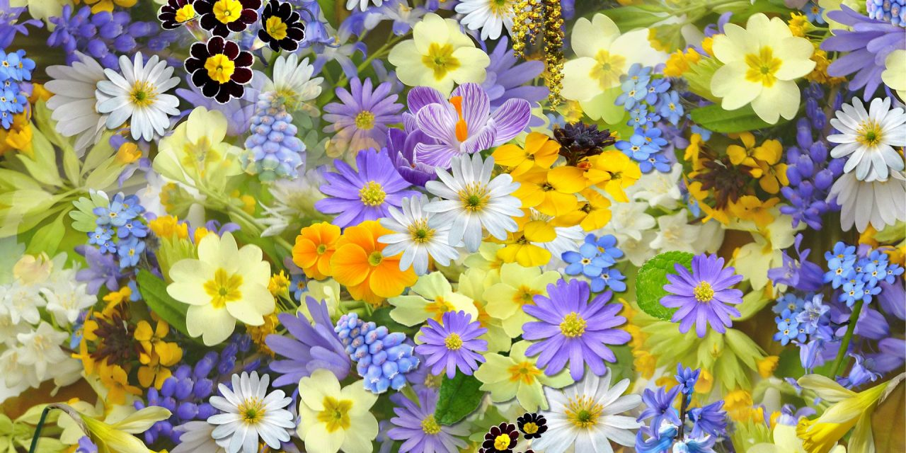 Colour therapy for fibromyalgia - Floral Colour Therapy