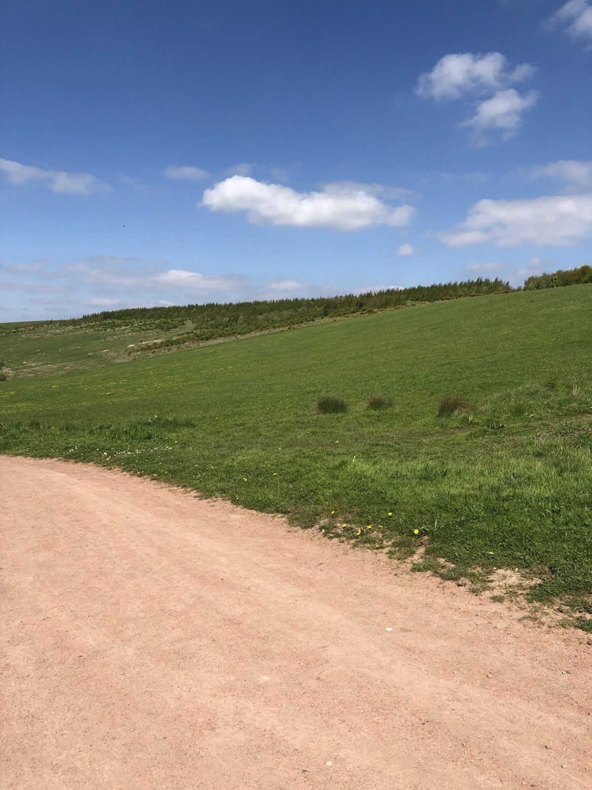 Living Creatively with Fibro | A golden pathway leading out between grass with a beautiful clear blue sky above