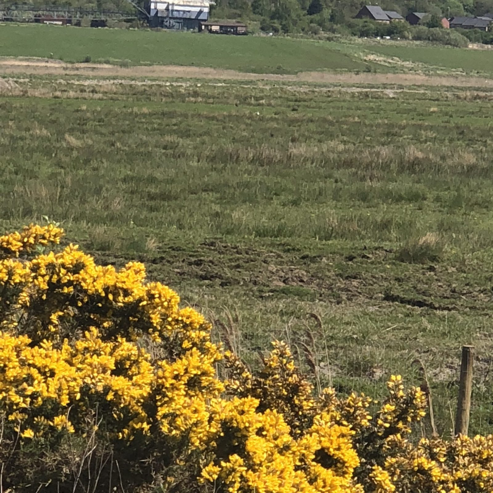 Living Creatively with Fibro | A view across the fields to the entranceway in the heat wave