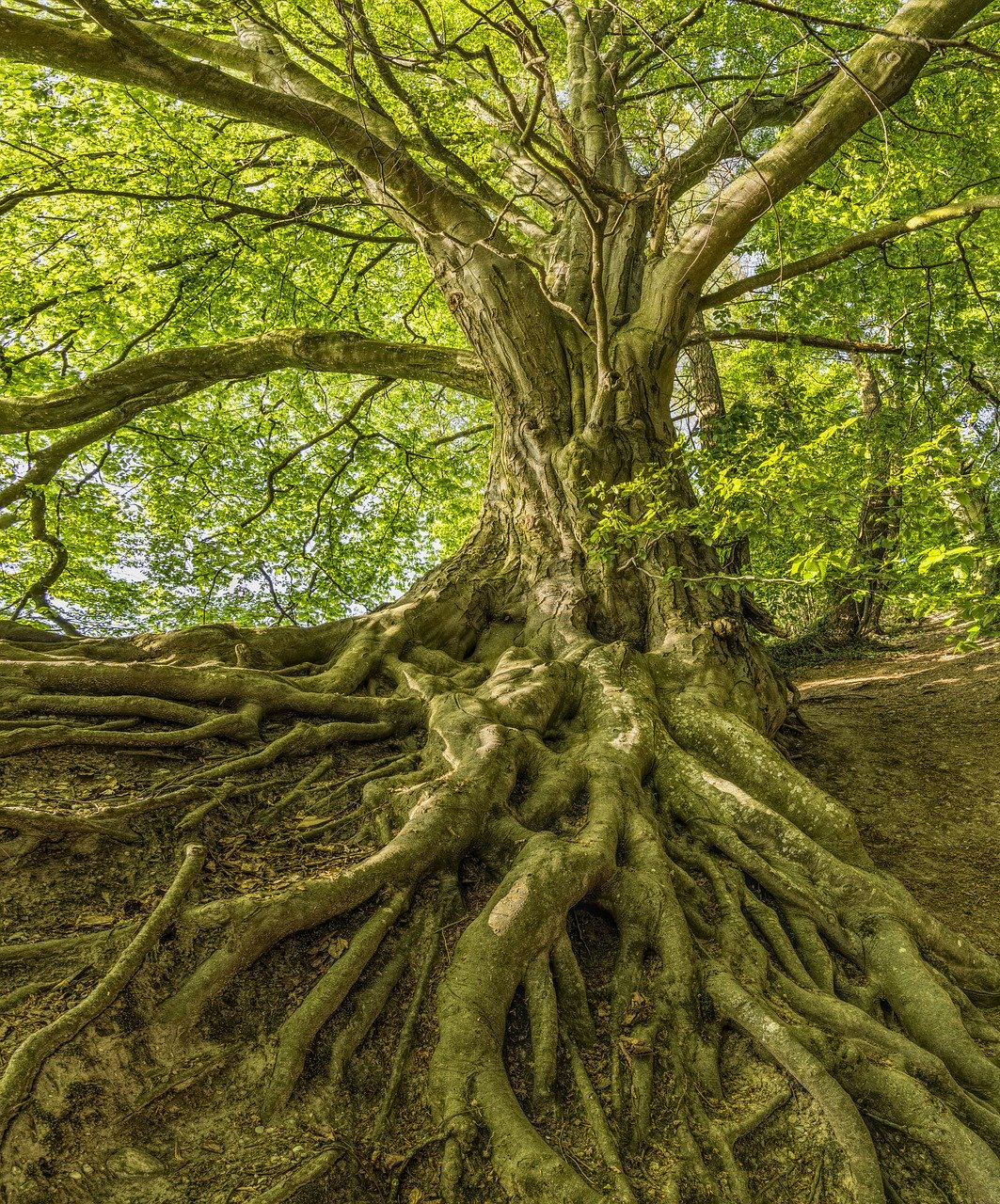 """An image of a large tree representing my large family tree 